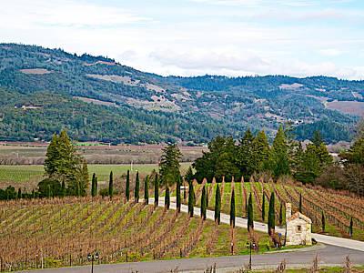 Vineyard In Napa Digital Art - Hillside Vineyard In Front Of Castello Di Amorosa In Napa Valley-ca by Ruth Hager