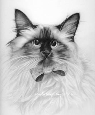 Burmese Python Drawing - Himalayan Cat by Natasha Denger