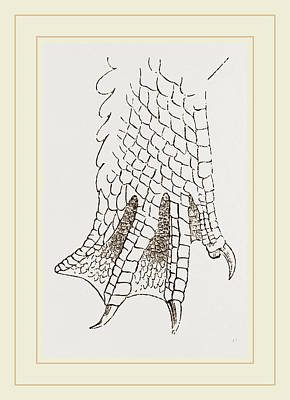 Hind-leg Of Crocodile Print by Litz Collection