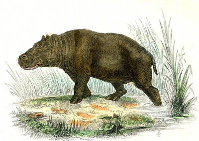 1859 Photograph - Hippopotamus by Collection Abecasis