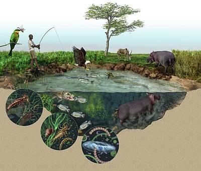 Hippopotamus Photograph - Hippopotamus Ecological Impact by Nicolle R. Fuller