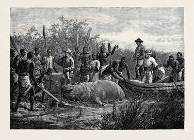 Hippopotamus Drawing - Hippopotamus Hunting In Angola West Africa 1880 by English School