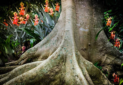 Tree Roots Photograph - His Signature Lies In All by Karen Wiles