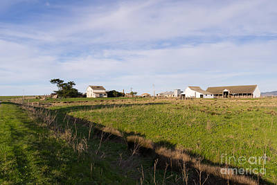 Cows Photograph - Historic D Ranch In Point Reyes California Dsc2348 by Wingsdomain Art and Photography