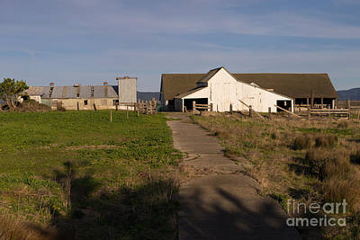 Contemplative Photograph - Historic D Ranch In Point Reyes California Dsc2369 by Wingsdomain Art and Photography