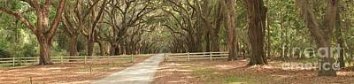 Georgia Plantation Photograph - Historic Plantation Road by Adam Jewell