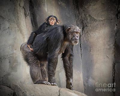 Chimpanzee Photograph - Hmmmm by Jamie Pham