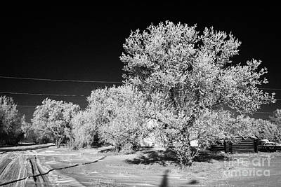 hoar frost on trees in small rural farming community during winter Forget Saskatchewan Canada Print by Joe Fox