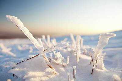 Drifting Snow Photograph - Hoare Frost On Grass by Ashley Cooper