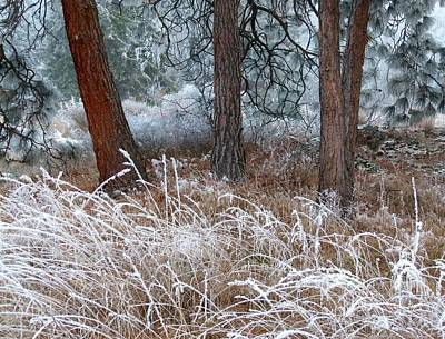 Ice Fog Photograph - Hoarfrost 22 by Will Borden