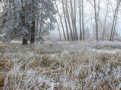 Ice Fog Photograph - Hoarfrost 24 by Will Borden