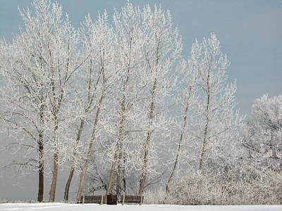 Hoarfrost Photograph - Hoarfrost Trees And Benches Along The Ottawa River by Rob Huntley