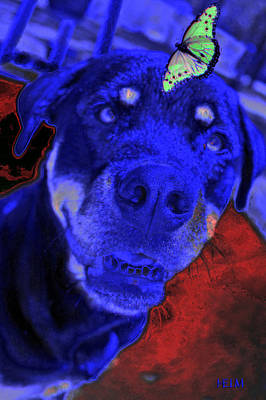 Chocolate Lab Digital Art - Hocus Pokus by Mayhem Mediums