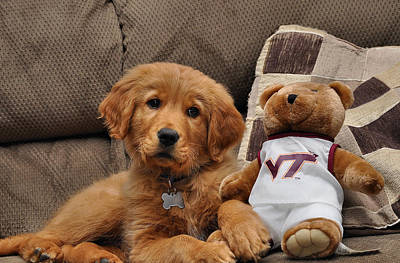 Dog Pics Photograph - Hokie Fan by Todd Hostetter