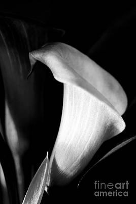 Botanical Photograph - Hold On Tight by Floyd Menezes