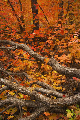 West Fork Photograph - Holding Back by Peter Coskun