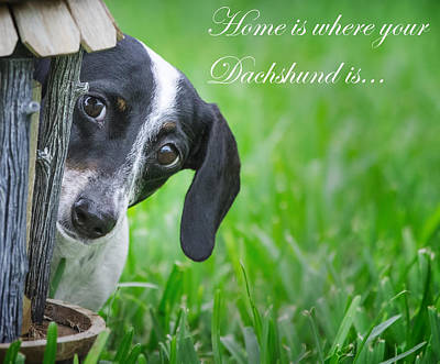 Little Dogs Photograph - Home Is Where Your Dachshund Is by Mark Andrew Thomas