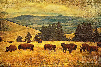 Buffalo Digital Art - Home On The Range by Lianne Schneider