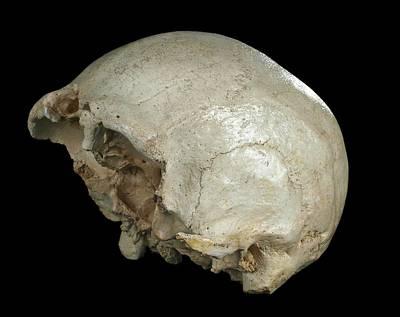 Oblique Photograph - Hominin Skull From Sima De Los Huesos by Javier Trueba/msf