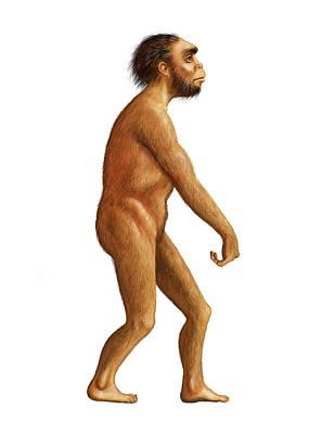Homo Naledi Print by David Gifford