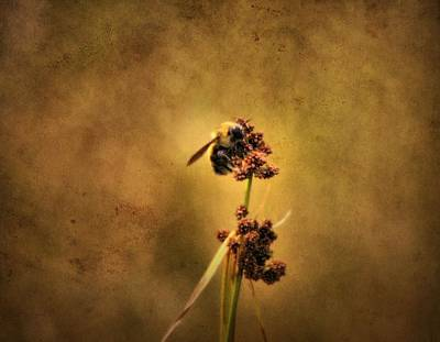 Wasp Photograph - Honeybee by Dan Sproul