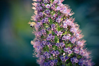 Insects Photograph - Honeybee Haven  by Priya Ghose