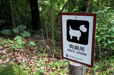 Hong Kong, Tai Po, Tai Po Kau Nature Print by Richard Wright