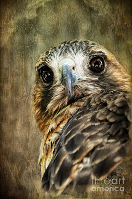 Hawk Digital Art - Honing In by Lois Bryan