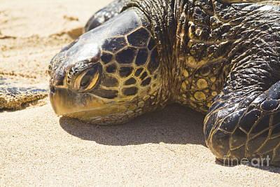 Hawaiian Honu Photograph - Honu - Hawaiian Sea Turtle Hookipa Beach Maui Hawaii by Sharon Mau