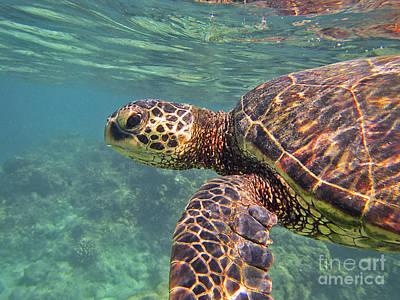 Hawaiian Honu Photograph - Honu Hello by Bette Phelan