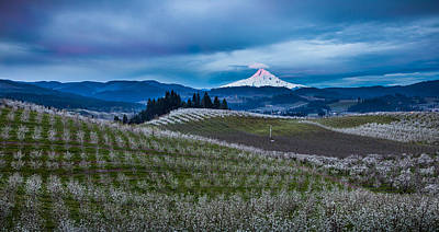 Hood River Orchard Sunrise Print by Thorsten Scheuermann