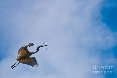 Hopeful Egret Building A Home  Print by Terry Garvin