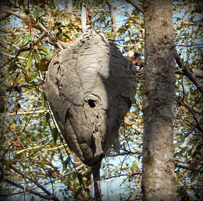 Hornets Nest Photograph - Hornets Hive by Lynn Griffin