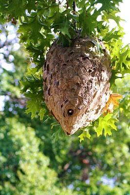 Hornets Nest Photograph - Hornets Nest by Karen Silvestri