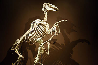 North American Wildlife Photograph - Horse And Human Skeletons Exhibit by Jim West