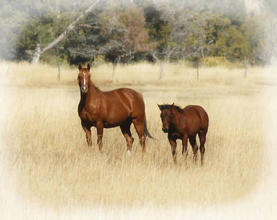 Horse And Pony 2 Print by Ernie Echols