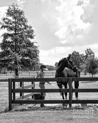 Thoroughbred City Photograph - Horse Bathing At City Park In Black And White by Kathleen K Parker