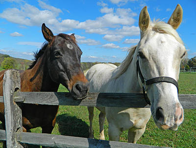 Horse Farm Maryland Photograph - Horse Beauties by Emmy Marie Vickers