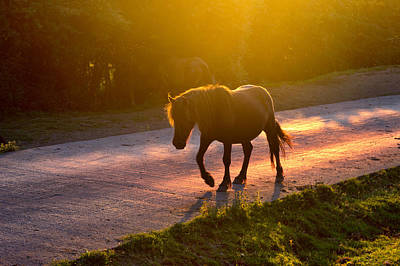 Horse Crossing The Road At Sunset Print by Mikel Martinez de Osaba