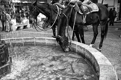 Police Art Photograph - Horse Drink In Santiago Mono by John Rizzuto