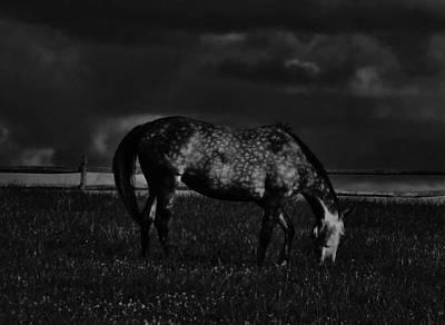 Solebury Photograph - Horse Grazing by Greg Kear