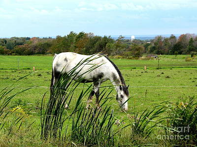 Animals Photograph - Horse Grazing In Field by Rose Santuci-Sofranko