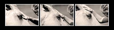 Horse Healer Original by Toppart Sweden