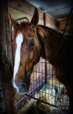 Horse In A Box Stall - Horse Stable Print by Lee Dos Santos