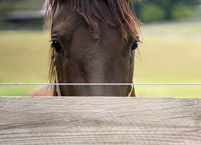 Horse Photograph - Horse Look by Donna Haggerty