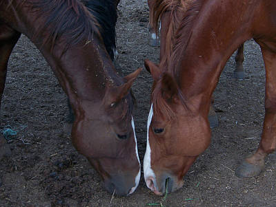 Photograph - Horse Love by Cherie Haines