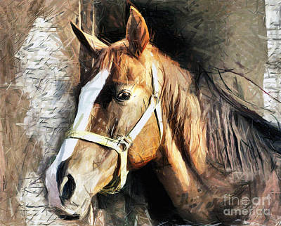 Drawing - Horse Portrait - Drawing by Daliana Pacuraru