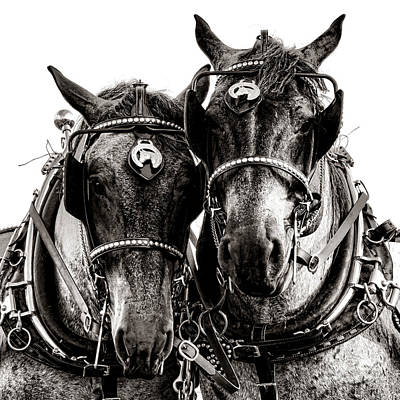Belgian Draft Horse Photograph - Horse Power by Olivier Le Queinec