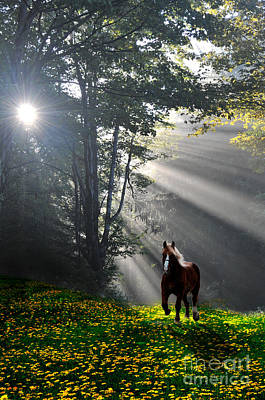 Horse Running In Dandelion Field With Streaming Sunlight Print by Dan Friend