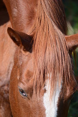 Horse Photograph - Horse4 by Mirek Bialy